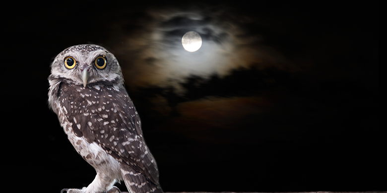 Picture of owl while it's dark outside.