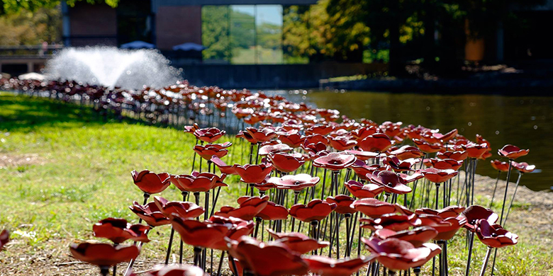 Poppies on the Richland College campus.